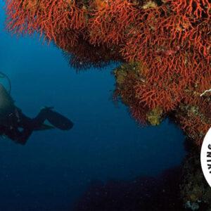 Diving Center CostaParadiso